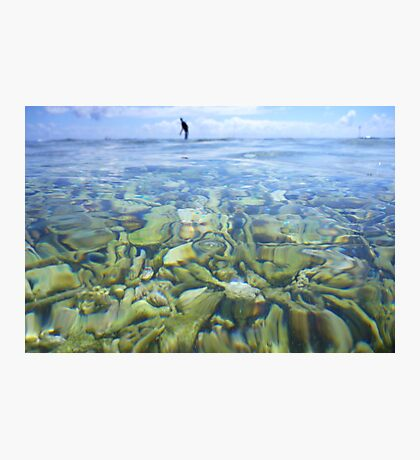 Coral Garden at Lady Elliot Island Photographic Print