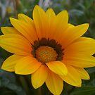 Flowers by klziegler