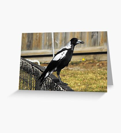 Australian Magpie Greeting Card
