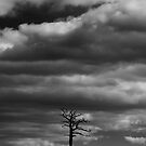 Under a lonely sky by MattGrover