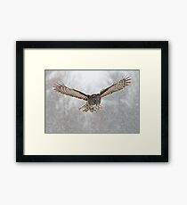 Great Gray Owl flying in snowstorm Framed Print