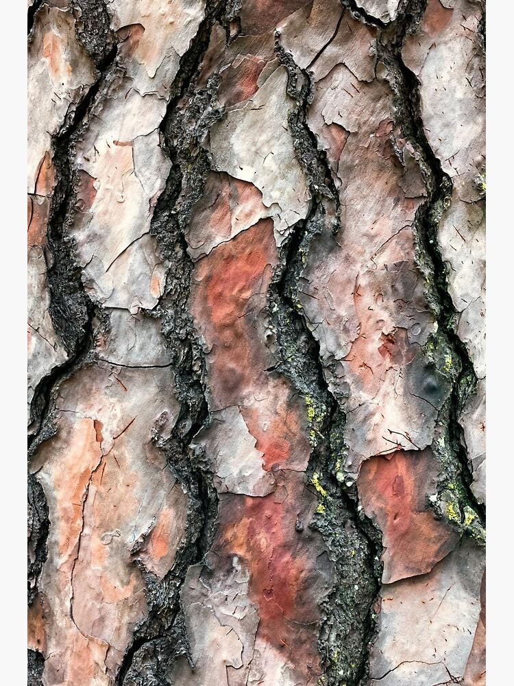 Chir Pine bark by fardad