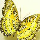 Golden Wings by Rosalie Scanlon