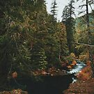 McKenzie River trail - Blue Pool by Eoxe