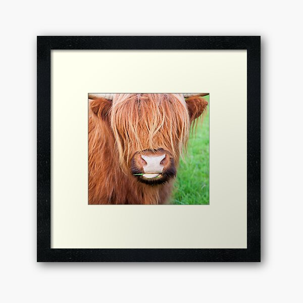 Face Mask (Scottish Highlands Cow) Framed Art Print