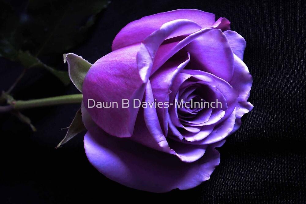 Lavender Rose by Dawn B Davies-McIninch