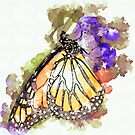 Monarch Butterfly on a Flower Watercolor by rhamm