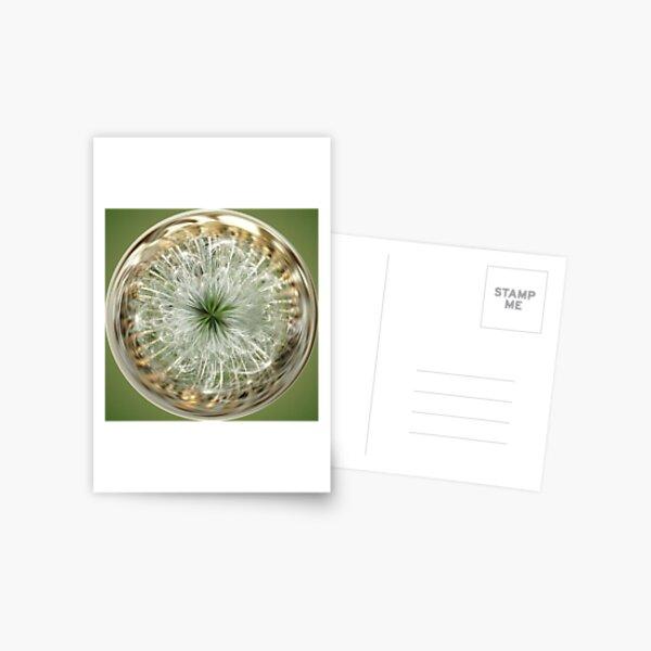 Dandelion Sphere Postcard
