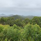 Tomaree National Park, Port Stephens, Australia  by Mariam Kabbout