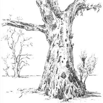 Gum Trees, Flinders Ranges by BarnabyEdwards