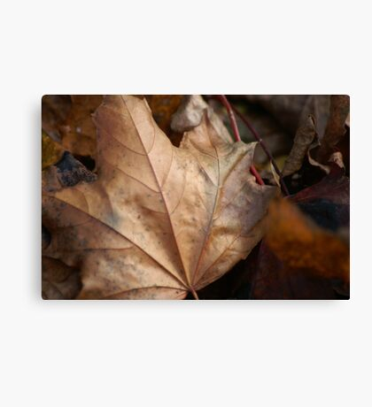 When Leaves Fall Canvas Print