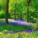 Hitch Wood, St Paul's Walden, Hertfordshire by Paul Dominic Gray