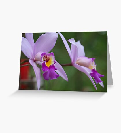 Orchid #1 Greeting Card