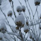 Powder Puffs by Lorelle Gromus