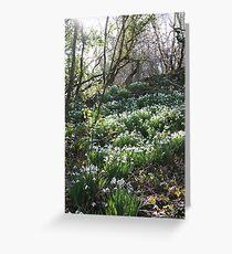Snowdrops in Cornish Woodland Grußkarte