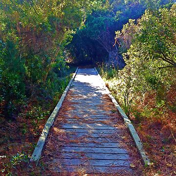 Walkway In The Woods by JoeyOConnor