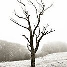 The Lonely Tree by Matt Jones