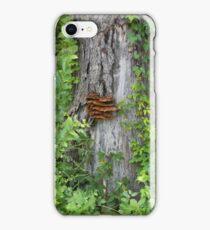 Bracket Fungus or Shelf Fungus iPhone Case/Skin