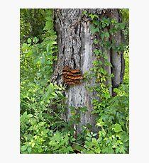 Bracket Fungus or Shelf Fungus Photographic Print