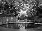 Garden by John Douglas