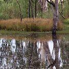 Murray River 1 by djscat