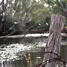 Murray River 2 by djscat
