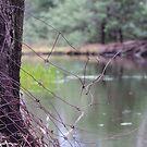 Murray River 3 by djscat