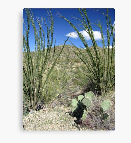 Sonoran Scenery Series ~ 4 ~ Canvas Print