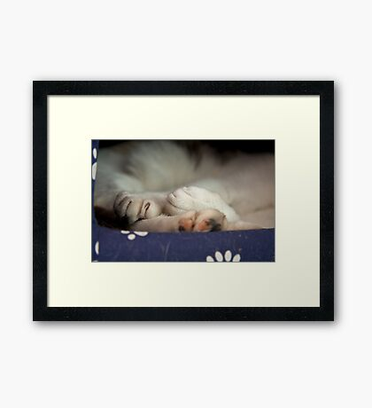 Paws & Claws Framed Print