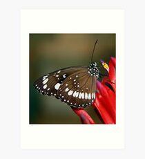 butterfly on red flower Art Print