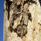 The Man on the Tree Trunk by Segalili