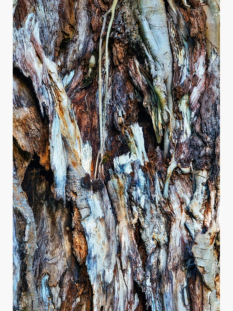 Decaying tree trunk by fardad