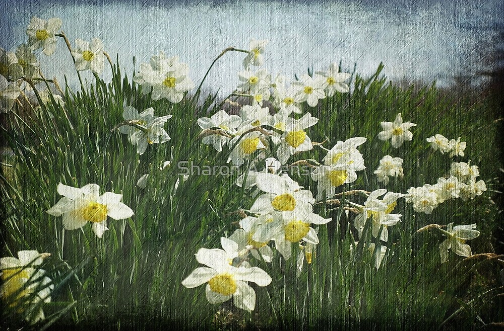 A Field of Daffodils by Sharon A. Henson