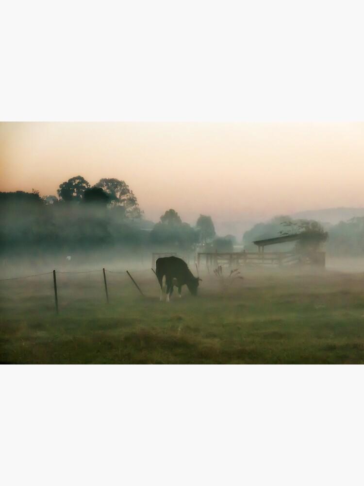 Foggy morning at the farm by fardad