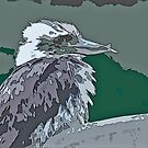 Kookaburra primping by eyes4nature