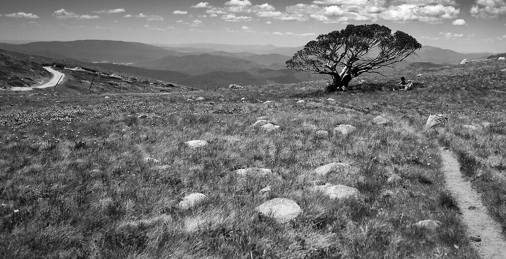 Tree on Mt Stirling, Victoria by Ashpix