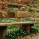 Sit a wee while by Heather Thorsen