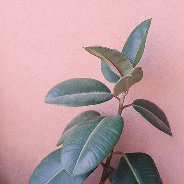 Vintage Pink and Green Plant by AlexandraStr