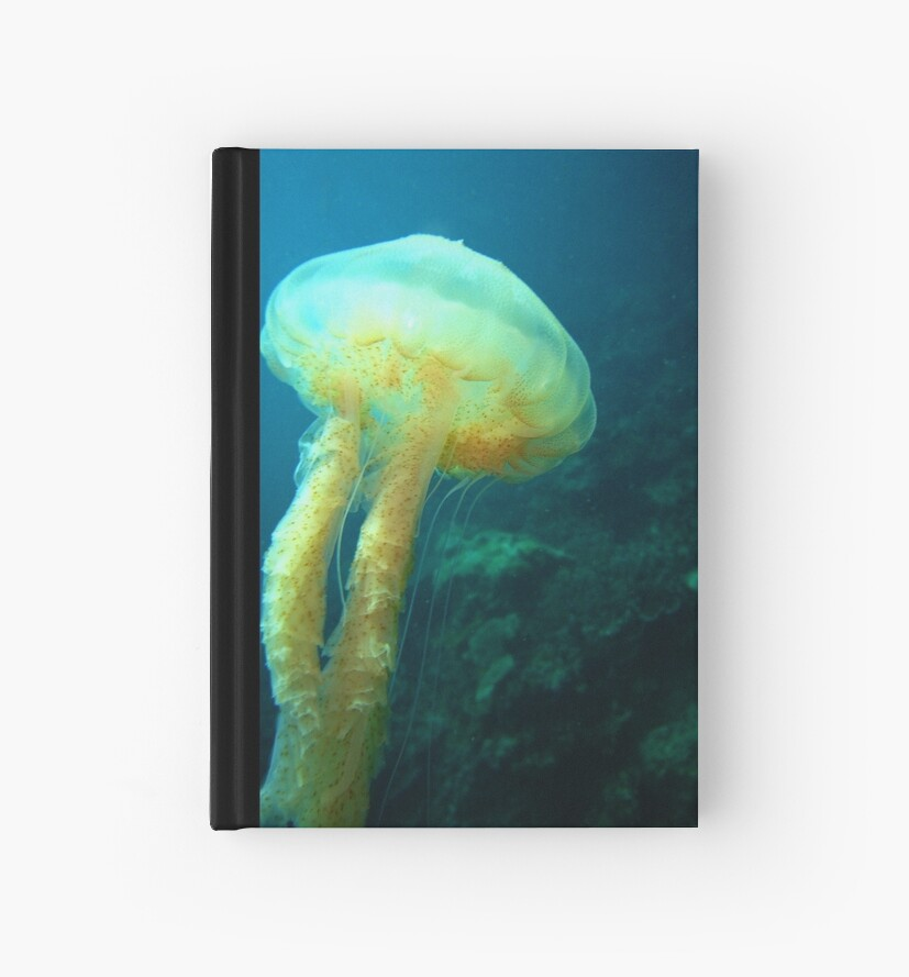 Jelly Fish by timlim