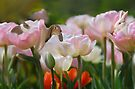 Bunnies and Tulips by Elaine  Manley