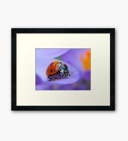 Pollen Lady Framed Print