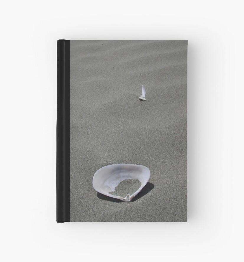 Sea shells by Geoff46