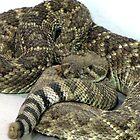 diamondback rattle snake by gabbielizzie
