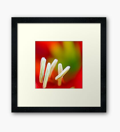 Macro of Lily Framed Print
