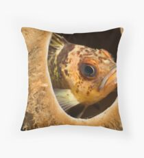 Rock Cod hangin out Throw Pillow