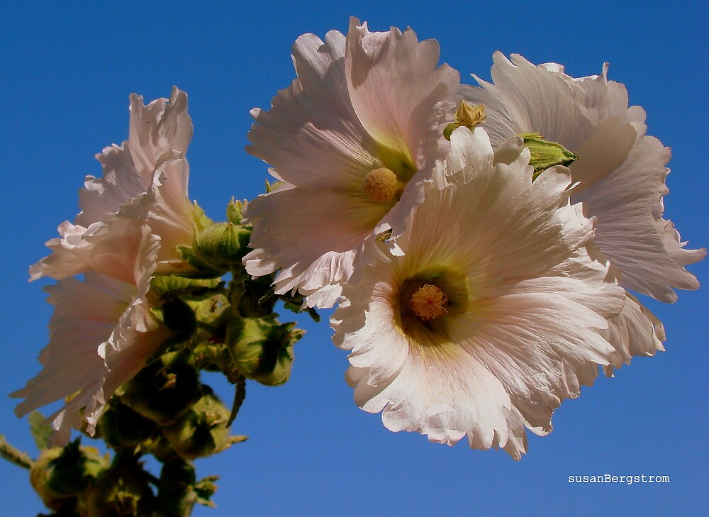 Flowers A'Poppin by Susan  Bergstrom