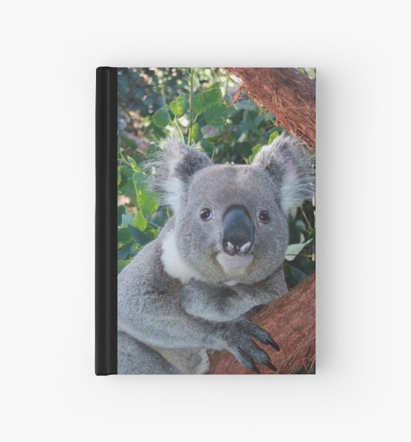 Koala Bear  by Suzy  Baines