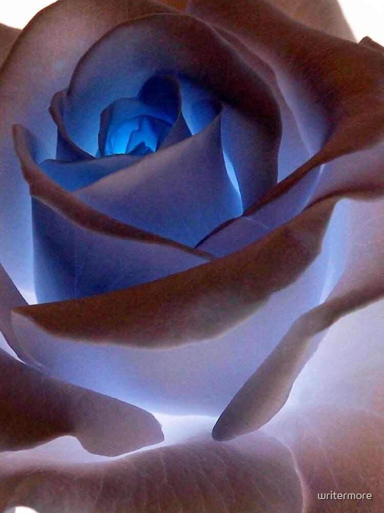 Heartglow Rose by writermore
