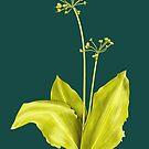 Wild Garlic Plant Botanical Art by Boriana Giormova