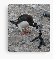 Gentoo Penguin in Antarctica & Go Pro  Canvas Print